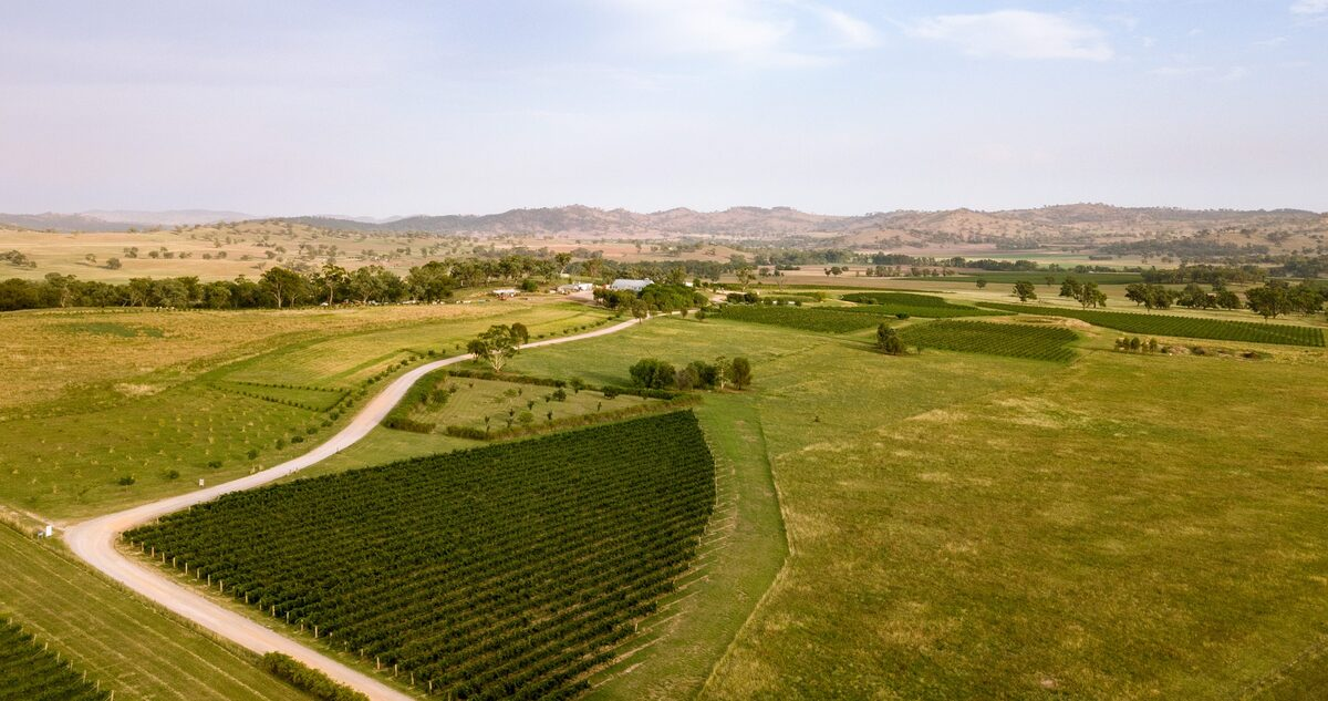 ABOUT LOWE FAMILY WINE CO
